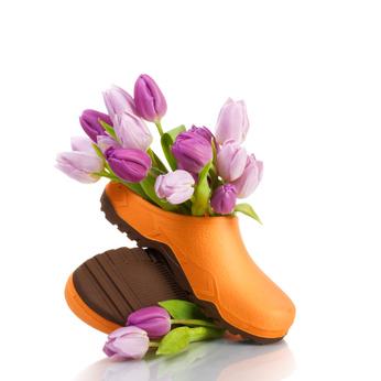 Tulpen-Schuhe