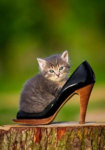 Alles für die Katz? Vermeiden Sie Fehlkäufe!